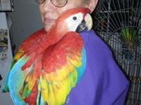 I have a baby scarlet macaw for sale that is almost