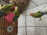 I have several lovebirds, ages 2 months to 4 months.