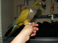 I am moving soon and need to sell my Patagonian Conure.