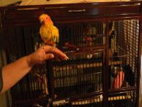 I HAVE A BEAUTIFUL SUN CONURE SHE WAS HAND FED AND IS