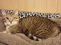 Handsome's story Handsome: 6 month old male tabby