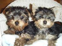 These handsome little boys are now ready for adoption.