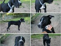 Jack is a very, very sweet young 1 year old boy with a