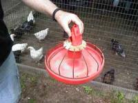 Poultry feeders...........No waste, No roost JUST HANG