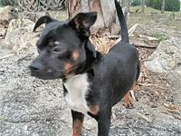 Hank's story Hank was surrendered along with his