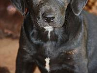 Hank's story Meet Hank, hes all lab mom is a full