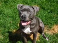 **FOSTER NEEDED** Hi my name is Hank. I am 2 years old,