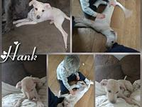 Hank's story Hank is a playful puppy, he came to