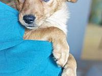 Hank's story All HSWC animals are spayed/neutered,
