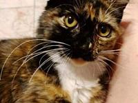 My story HANNAH - F, DMH, Calico, approximately 6