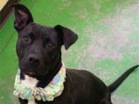 Friends of the Memphis Animal Shelter says: Hannah is a