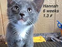 Hannah's story Our pets are spayed/neutered and current