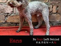 My story Meet  Hans! Hans is currently living in our