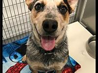 Happy - 064 / 2018's story Please contact Maumelle