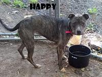Happy's story Happy is a very sweet girl that loves to
