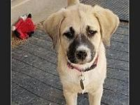 Happy's story Happy is a 12 wk old spayed female
