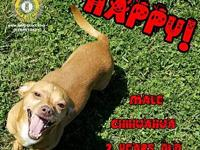 Happy's story You can fill out an adoption application