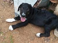 Happy's story I am a male mixed pup. I am 12 weeks old