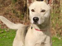 Happy is a 2 year old spayed female husky mix that