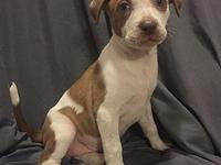 Hardaway's story Hardaway is an 8 week old mixed breed