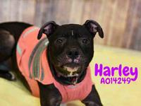 HARLEY's story Hi! My name is Harley and I am looking