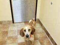HARLEY's story Coonhound mix 4 years old Neutered Male