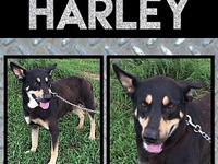 Harley's story Harley was found on a very busy hwy