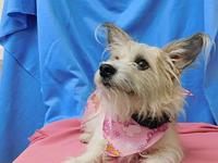 "HARLEY's story ""HARLEY"" is a terrier/mix. We listed her"
