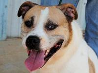 Harley's story Harley is a smart and friendly boy who