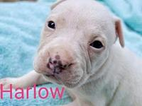 Harlow's story PLEASE NOTE! Unless stated otherwise,