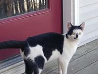 I'm a playful and affectionate black & white kitty,