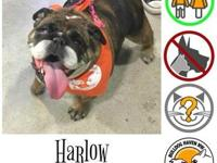 Harlow's story Say hello to Harlow!   Harlow is a
