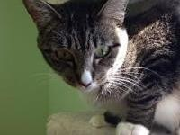 Harmony's story Harmony was one of 17 cats dropped at