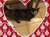 Harmony: A terrific Tortie cat, Mom to Kittens that are