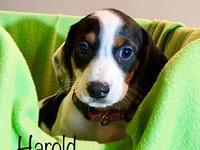Harold's story All SAAP animals are vet checked, UTD on