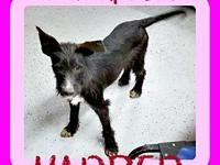 HARPER's story Please contact Jenny Cope