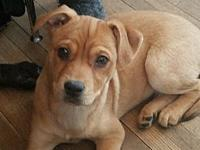 Harper's story *Puppies are currently in foster care.