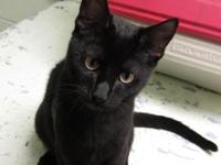 Harpo's story Harpo is approx 5-6 mos old and has been