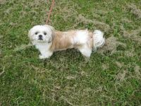 HARRIETT's story HARRIET Female Spayed SHIH TZU BICHON