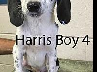 Harris Boy 4's story ADOPTION APPLICTAION: