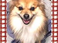Harrison's story Harrison is a 1-2 year old pom mix,