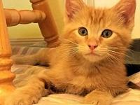 Harry's story ***PRE-ADOPTED*** All of our cats and