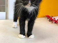 Harry's story Harry is here with his sister and