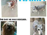Harry's story PLEASE Contact MIC rescue directly @