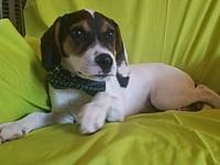 Harvey's story HELLO POTENTIAL ADOPTERS, PLEASE READ