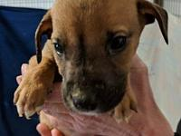 Harvey's story These beautiful little babies came to