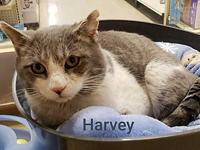 Harvey's story Hi, I'm Harvey, a 5 yr old, male, grey &