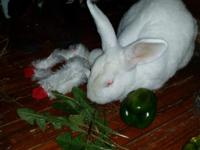 Harvey is a sweet, neutered bunny, looking for a