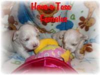 Hava-a-Tese. Born March 12, 2012, will be ready on May