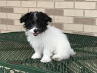 Seth is lovable little male available and ready for his